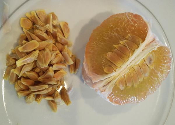 Chất nhầy bao quanh hạt bưởi có chứa chất pectin