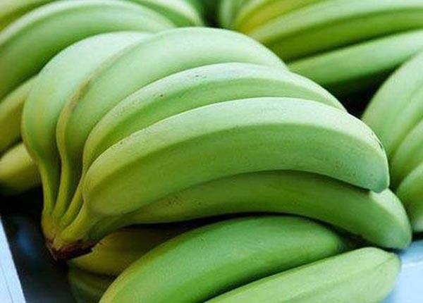 Dùng chuối tiêu xanh để điều trị bệnh đau dạ dày