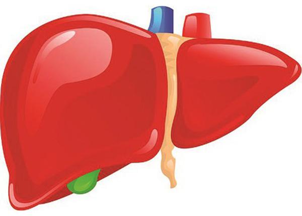 Gan là một trong những bộ phận quan trọng nhất của cơ thể