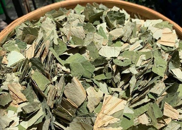 Lá sen chứa hàm lượng quercetin và flavonods cao