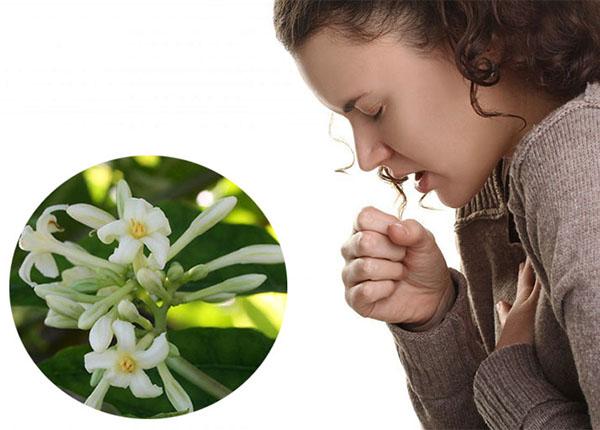 Mẹo đơn giản từ hoa đu đủ đực chữa bệnh viêm họng phổ biến