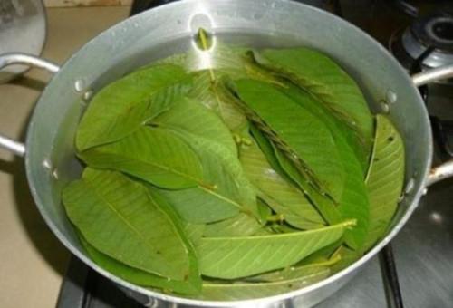 Bài thuốc chữa bệnh tiểu đường bằng lá ổi