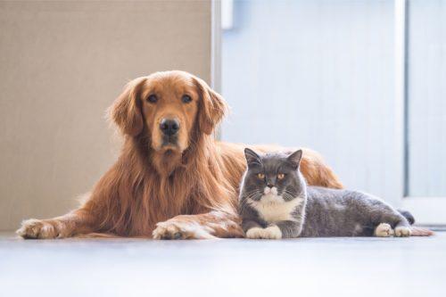 Nguyên nhân và dấu hiệu cho thấy trẻ nhiễm giun sán từ thú cưng