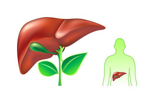 Triệu chứng của bệnh Viêm gan E thường ủ bệnh từ 15 - 60 tuần